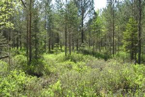 Rabastuv mets